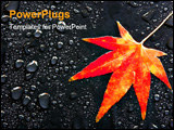 PowerPoint Template - a red japanese maple leaf among raindrops