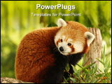 PowerPoint Template - Portrait of a Red Panda eating bamboo