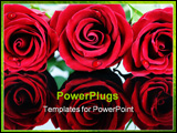 PowerPoint Template - Three beautiful red roses on highly reflective surface.