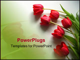 PowerPoint Template - red tulips