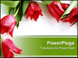 PowerPoint Template - frame made of red tulips on white background