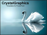 PowerPoint Template - Serene swan gliding on water.