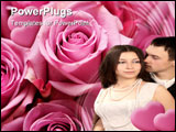 PowerPoint Template - Pink - purple bouquet of roses in a close up detail