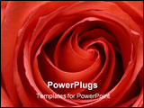 PowerPoint Template - rose abstract macro, shallow depth of field