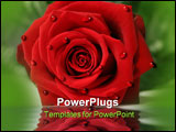 PowerPoint Template - red rose laying on table