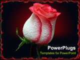 PowerPoint Template - white with red border rose on black background