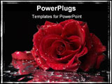 PowerPoint Template - Closeup of wet red rose and some water drops on black background