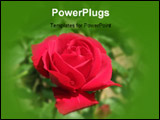 PowerPoint Template - Red Flower In the park near by School Bora Stankovic