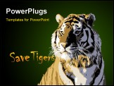 PowerPoint Template - majestic wild tiger king of animal vector image