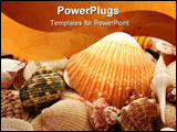 PowerPoint Template - Assorted Sea Shells as a Background includes Starfish