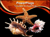 PowerPoint Template - seashell composition on black background