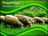 PowerPoint Template - It is funny sheeps, which grazing in the park.