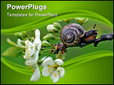 PowerPoint Template - A snail crawling on a branch of blooming apple tree