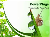 PowerPoint Template - Snail on dewy grass