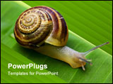 PowerPoint Template - snail on banana palm green leaf closeup