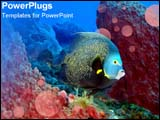 PowerPoint Template - A colorful fish swims over coral reef.