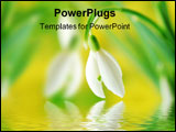 PowerPoint Template - Close-up of white snowdrop against green and yellow blurred background