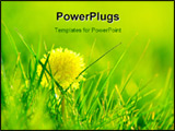 PowerPoint Template - Fresh spring background. Shining dandelions in fresh grass