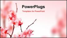 PowerPoint Template - Spring Blossom
