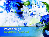 PowerPoint Template - Blue bouquet of first spring flowers closeup