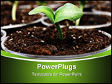 PowerPoint Template - Fresh green pumpkin sprouts in the pots