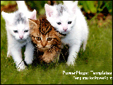 PowerPoint Template - Cats walk in synchrosy.