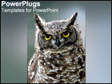 PowerPoint Template - An owl looks sternly at the camera.