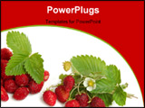 PowerPoint Template - Wild strawberries plant with green leaves flower red and green berries on white background