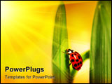 PowerPoint Template - Ladybug climbing tulip leaf with sun rays