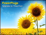 PowerPoint Template - a couple of sunflowers over the blue skies