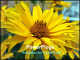 PowerPoint Template - The yellow flower nature daisywheel garden flora