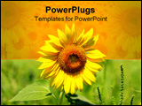 PowerPoint Template - Sunflower close up summer morning in field