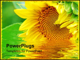 PowerPoint Template - Close up image of sunflower with some green leafs