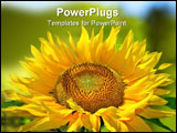 PowerPoint Template - A Bright Sunflower shot against a deep blue summer sky