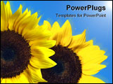 PowerPoint Template - couple of sun flowers