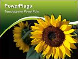PowerPoint Template - shining sunflower on the black background