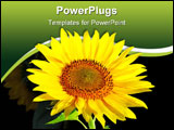 PowerPoint Template - Large, bright, flower, sunflower seeds, against the turquoise sky