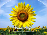 PowerPoint Template - Sunny sunflowers against the sky in hot summer