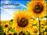 PowerPoint Template - Beautiful sunflower in a field. Nature concept