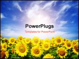 PowerPoint Template - yellow sunflower field over cloudy blue sky