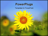 PowerPoint Template - Amazing flying bee needed honey fron sunflower