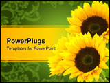 PowerPoint Template - three sunflowers isolated on a white background right corner of a page