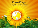 PowerPoint Template - sunflower and world woncept. sunflower field. agriculture concept