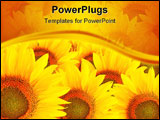 PowerPoint Template - beautiful of yellow Sunflower blossum in field