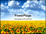 PowerPoint Template - a field with dense sunflowers and clouds