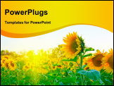 PowerPoint Template - beautiful sunflowers at field