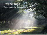 PowerPoint Template - shafts of morning sunlight lighting a forest path