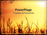 PowerPoint Template - Nice golden sunset over on wheat field