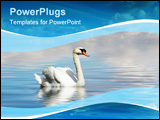PowerPoint Template - beautiful swan in calm water