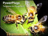 PowerPoint Template - Three Honey Bees Feeding and Working Together
